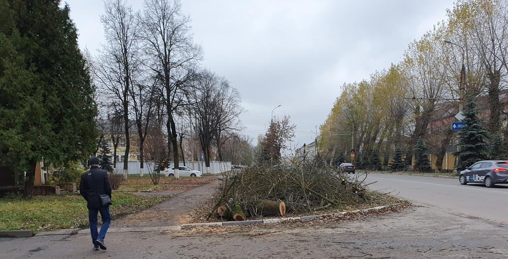 Власти Брянска обещали восстановить утраченную липовую аллею на улице Ульянова